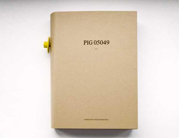pig-05049