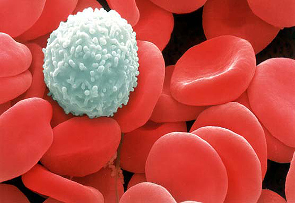 white-blood-cell