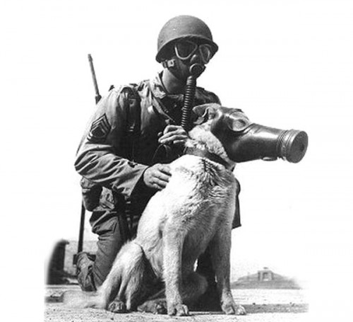 dog_gas_masks_600