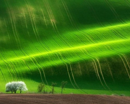 Marcin-Sobas-Spring-Tree-LIAS